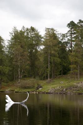 Feather on the Tarn