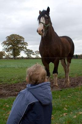 Thats a Big Horse